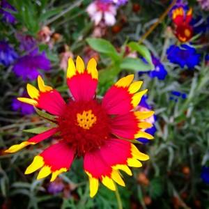 Allison's Flower